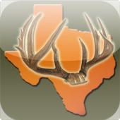 Texas Deer Rut